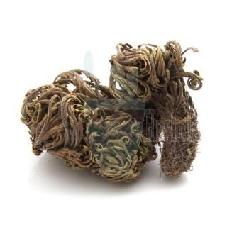 한국산l 부처손 (바위손)