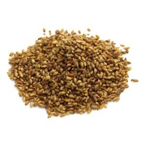Biota Seeds (Arborvitae)