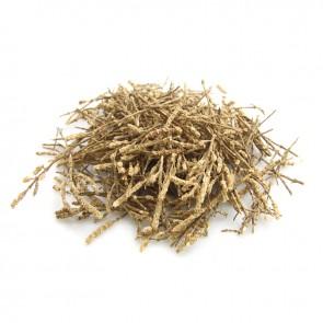 Salicornia (Glasswort / Samphire)